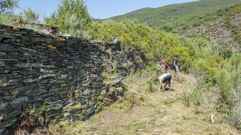Algúns muros estaban praticamente ocultos tras a broza