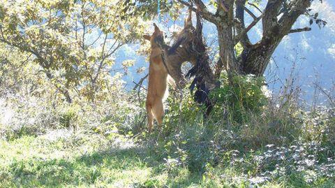 Los cadáveres de un perro y un buitre aparecen colgados de un árbol en Lena.Los cadáveres de un perro y un buitre aparecen colgados de un árbol en Lena