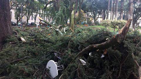 Caída de las palmeras de Pontevedra