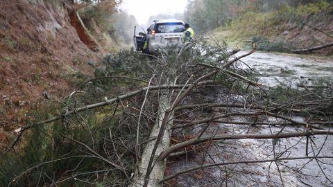Árboles caídos en la LU-P-1611 entre Maceda e Lousada