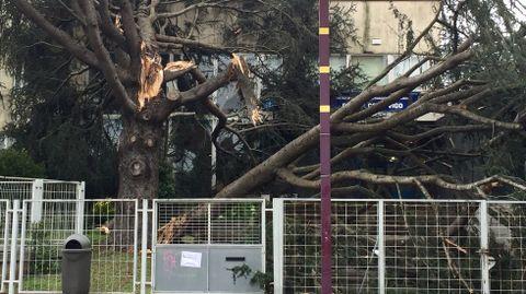 Destrozos por el temporal en Vigo