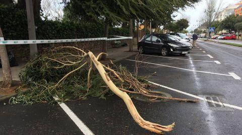 Ramas caídas por el temporal en Santa Cristina, Oleiros