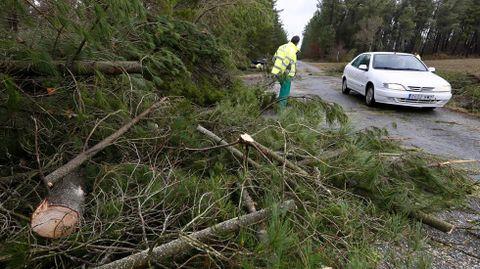 Caída de árboles en el Km 51 de la LU-P-1611 en las proximidades de Begonte