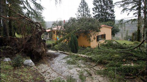 Árboles derribados por el viento en Negreira
