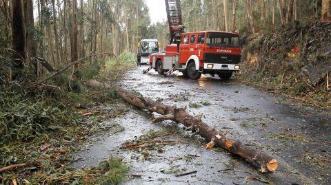 Transbordo de viajeros por el peligro de caída de un árbol por el temporal en la carretera de San Xurxo, Diniños.