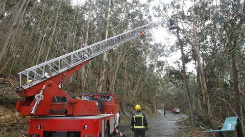 Peligro de caída de un árbol por el temporal en la carretera de San Xurxo, Diniños.