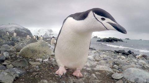 Las imágenes de un barbanzano en la Antártida