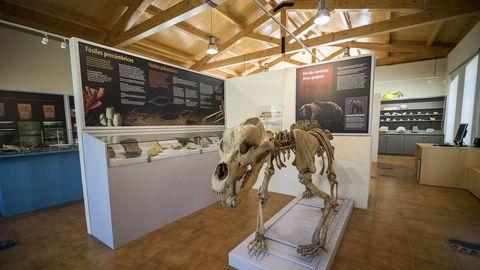 Una réplica de un esqueleto de oso cavernario -la única completa que puede verse en Galicia-  preside la sección de paleontología.