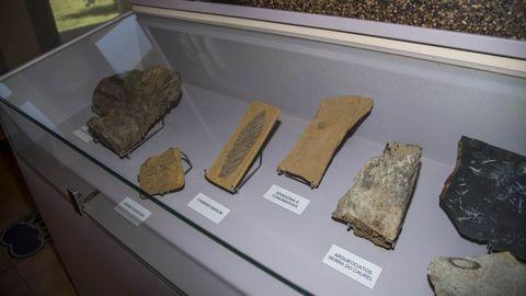 Fósiles del Paleozoico en una de las vitrinas del museo