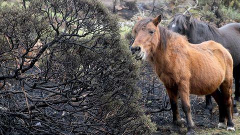 Monte quemado en Lidón