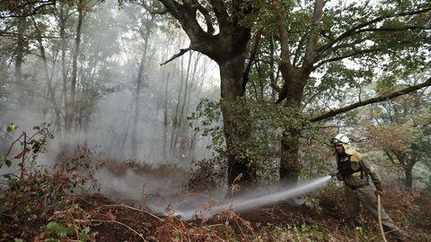 Incendio en una zona de bosque autóctono en San Fiz, Bóveda