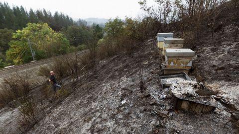Colmenar quemado en Chavaga