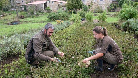 Dos de los trabajadores de las plantaciones ecológicas de Orballo, en Paderne, en una foto de archivo
