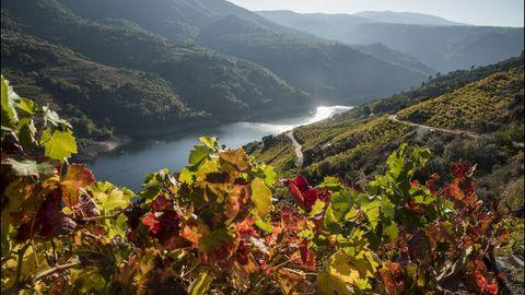 Las hojas de los viñedos cambian de tonalidad en la ribera de Doade, en Sober