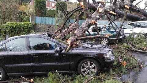 En Arteixo el viento también hizo caer varios árboles. Imágenes de O Pedregal