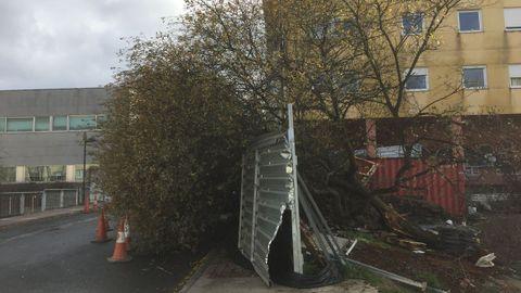 Árbol caído frente al centro de salud de Santa Cruz, Oleiros