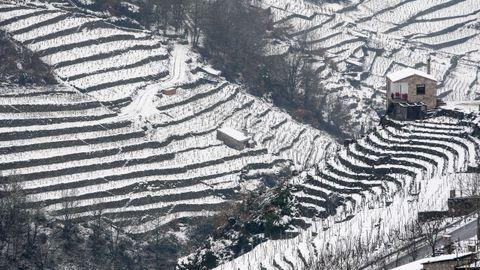 La nieve que deja el temporal cubre los bancales de las viñas de la Ribeira de San Fiz.