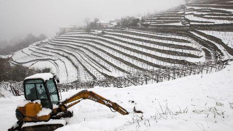 La nieve que deja el temporal cubre los bancales de las viñas de A Cova.