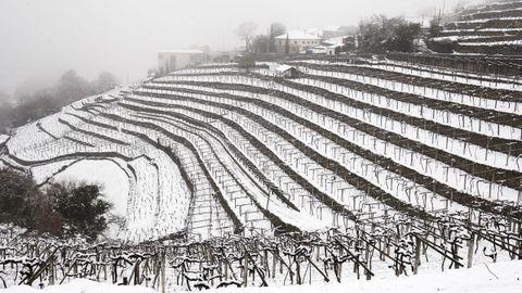 La nieve que deja el temporal cubre los bancales de las viñas de A Cova
