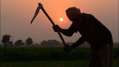 Un agricultor indio trabaja la tierra en las afueras de Amritsar, en India