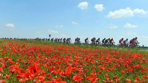 El pelotón del Giro de Italia pasa junto a un campo de amapolas entre Abbiategrasso y Prato Nevoso