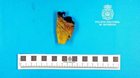 Artefacto localizdo por la Policía Nacional en las inmediaciones del estadio de O Couto (Ourense) en septiembre de 2016