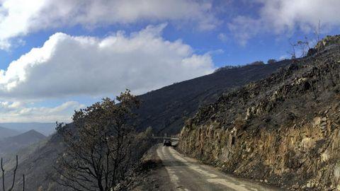 El monte de Deva, hace un añ. Esta pista lleva a Deva, una aldea en la que solo vive un vecino, tenía el monte totalmente arrasado