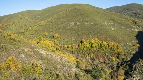 Devesas o bosques mixtos de Montouto y Cervo