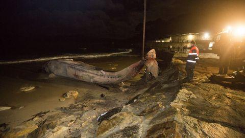 Ballenas.Trabajos para la retirada de la ballena en Balarés, Ponteceso