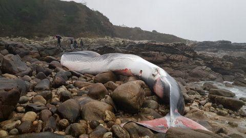 Ballenas.El hallazgo se produjo en la zona conocida como O Porto do Costado, casi en el límite con O Rosal