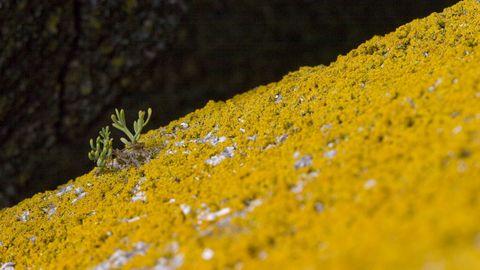 A actividade vital dos liques disgrega crea unha superficie máis aceptable para a chegada doutros organismos