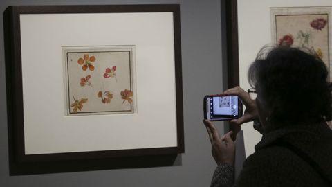 Los estudios botánicos fueron otra de las aplicaciones del dibujo