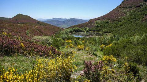 La laguna de A Lucenza, con agua y en primavera