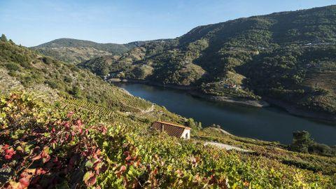 La ribera de Amandi da nombre a la subzona vinícola, que se extiende por Lobios y Pinol