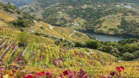 Otra vista de los viñedos de la ribeira de Lobios