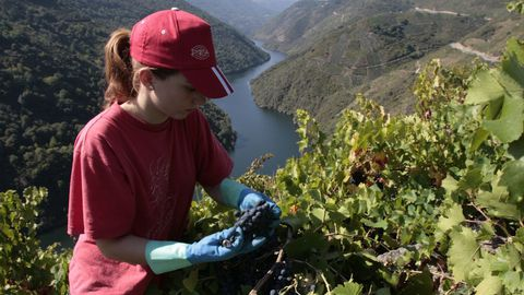 Ribeira Sacra, un vino de héroes