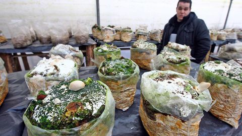 Instalacións dunha empresa galega de biotecnoloxía aplicada ao cultivo sostible de cogomelos