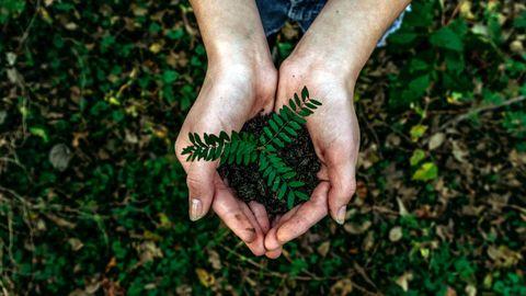 economía circular, planta, naturaleza, reciclaje, recursos, tierra