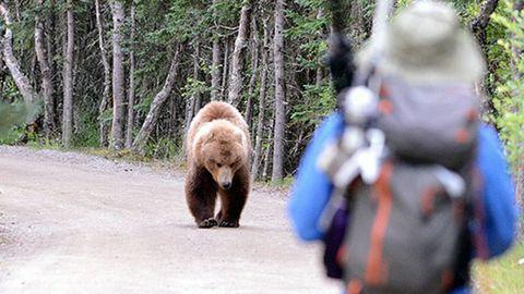 Encuentro de una persona con un oso en un parque natural de Estados Unidos