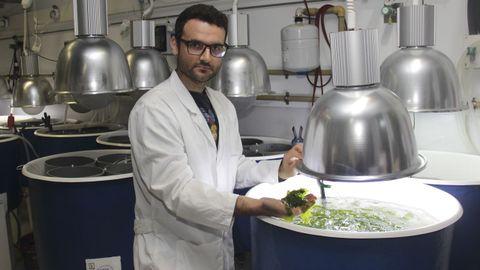 cica.Estudio de macroalgas. Una de las aplicaciones del grupo en el que trabaja Eduardo Casais Caamaño es conseguir biofiltros en acuicultura para generar productos enriquecidos