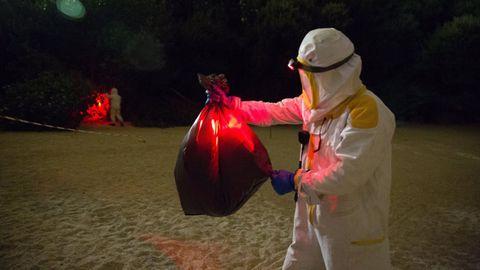 Un bombero de A Coruña retira un nido de velutina en la playa de As Lapas