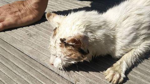Mou, el gato rescatado de morir ahogado en la ría de Navia