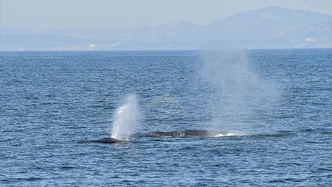 Una ballena se da un festín de kril entre Muros y Corrubedo