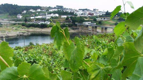 Vista de Portomarín con unos viñedos en primer termino