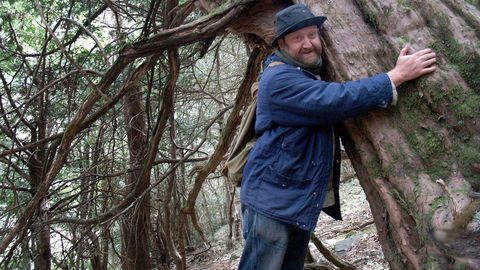 casaio bano.TEIXADAL DE CASAIO.  En la comarca de Valdeorras, 300 tejos forman el que puede ser el bosque más antiguo de Galicia