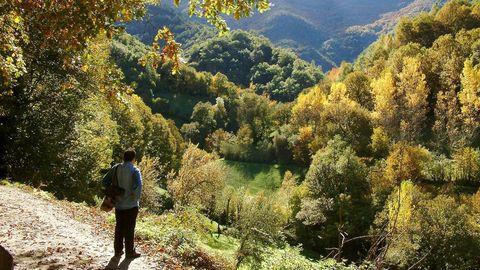 devesa bano.DEVESA DA ROGUEIRA: O Courel en estado puro. Aquí está uno de los bosques atlánticos más impresionantes de Galicia