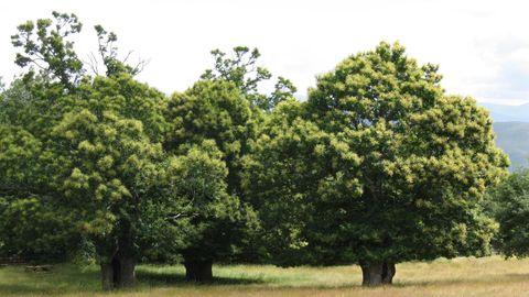 rozabales bano.SOUTO DE ROZAVALES. En lo alto de Manzaneda, este es uno de los bosques más recomendables