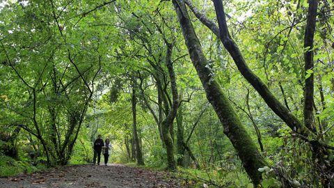 retorta bano.SOUTO DA RETORTA: Además de O Avó, su eucalipto centenario, el eucaliptal Chavín (Viveiro) conserva algunos de los ejemplares de este árbol más gigante de Galicia