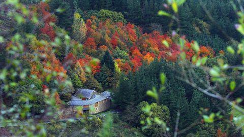 marronda.FRAGA DA MARRONDA: Este es un ejemplo excepcional de bosque autóctono gallego, con sus árboles caducifolios, en otoño es todo un espectáculo. Está en Baleira (Lugo)