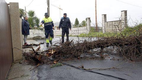 Árbol caído en O Lagartiño, en A Illa